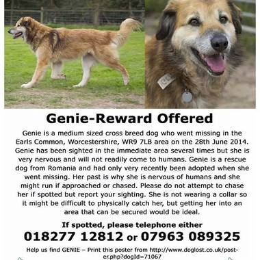 MISSING!! Anyone seen Genie in the Earls Common, Worcestershire WR9 7LB area 1