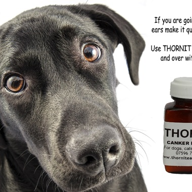 The Amazing Thornit Powder for Getting Rid of Ear Mites and Wax!! 1