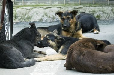 Love Underdogs Ceases Rehoming Activities in the UK