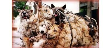 Animals Asia's Dog Projects in China