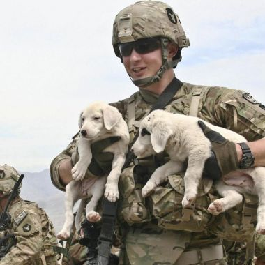 Soldier with puppies
