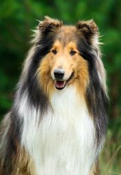dog-featured-post